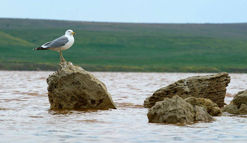 The Opuk Nature Reserve is home to 34 rare bird species included in the Russian Red Data Book