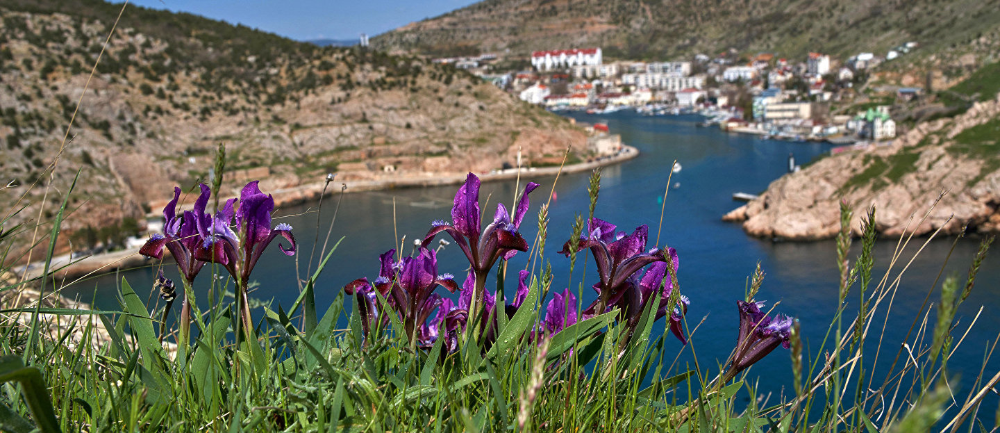 Flowers on the territory of the Genoese fortress of Cembalo in Balaklava