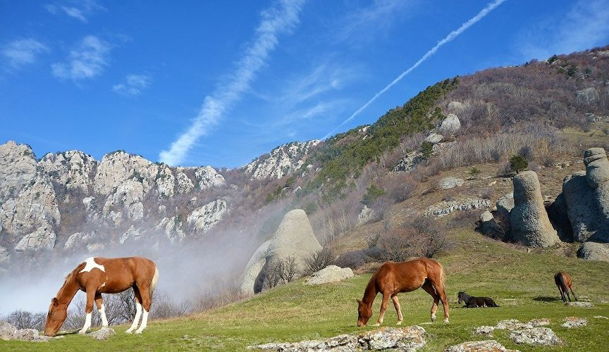 Horses on Mount Demerdzhi