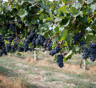 Crimean wineries: Eternal values